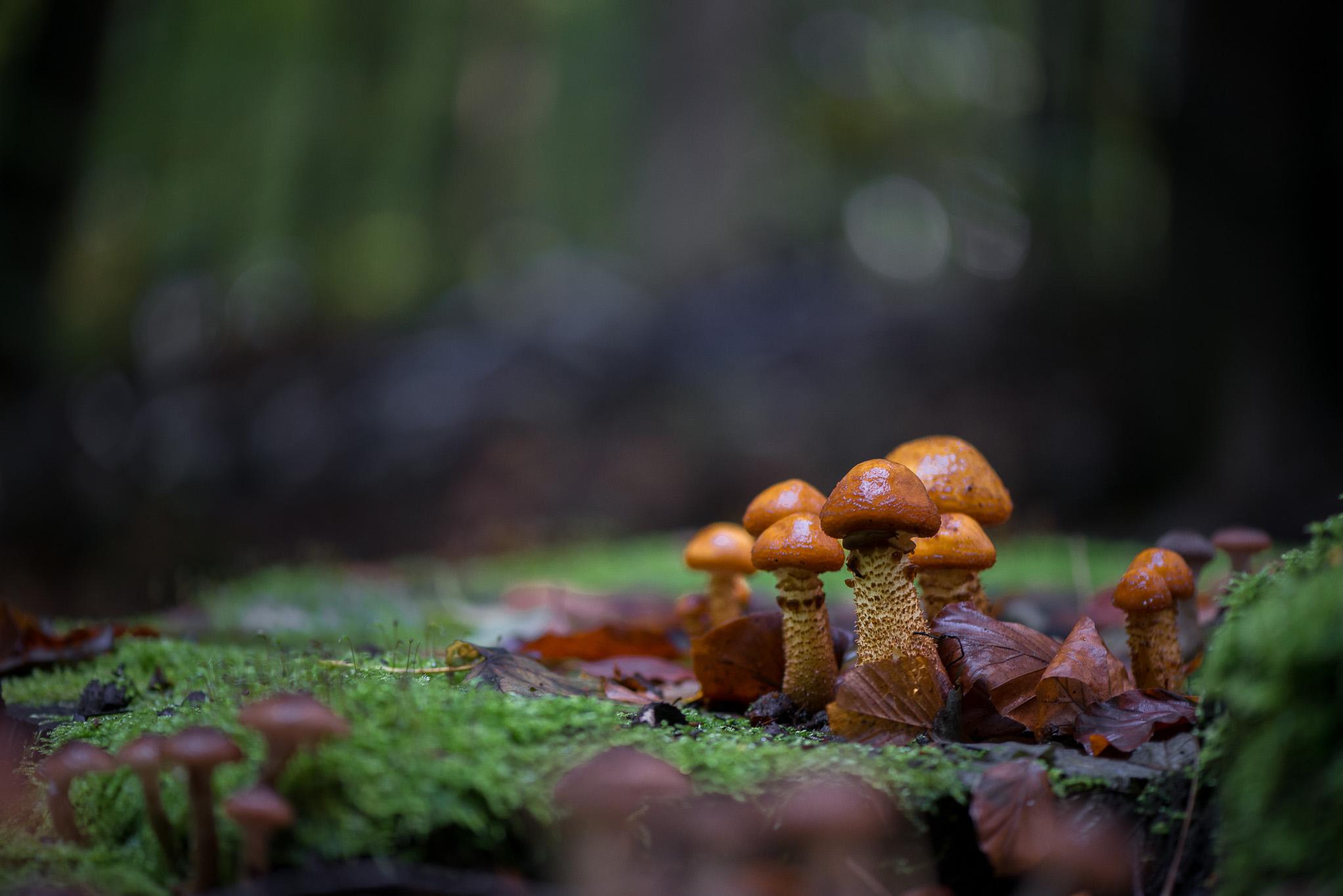 Groupe de champignons par Marc Feron
