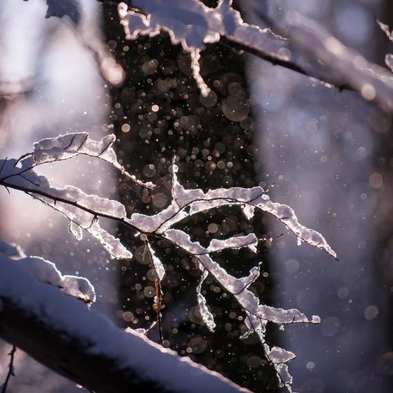 Givre et neige sur les arbres, détail photographique par Marc Feron